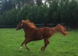 pensione-cavalli2